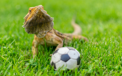 17 Best Toys & Activities For a Happy Bearded Dragon