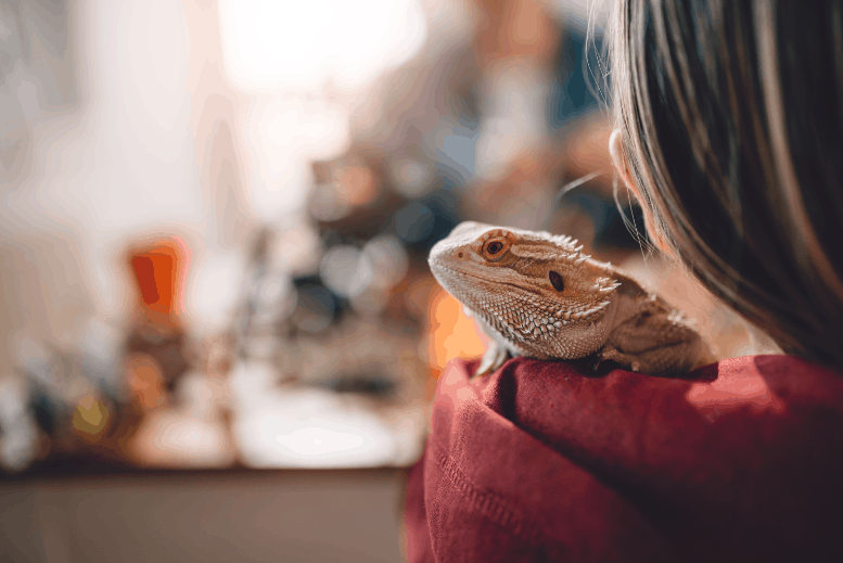 Do Bearded Dragons Know Their Name? The Surprising Truth!