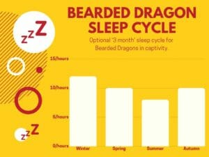 bearded dragon sleep cycles