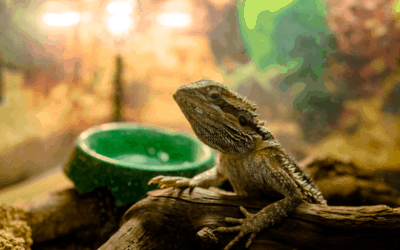 Here's How Often Bearded Dragons 'Really' Need Water!