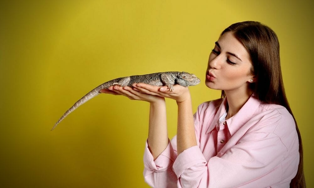 Can I Kiss My Bearded Dragon? (What Nobody Tells You)