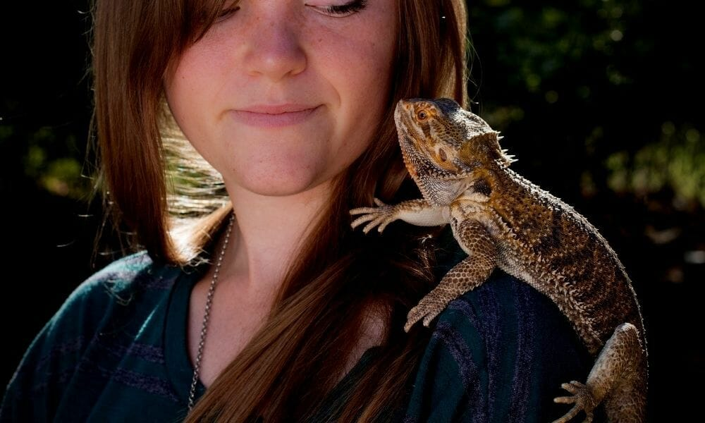 Are Bearded Dragons Social? All You Need to Know!
