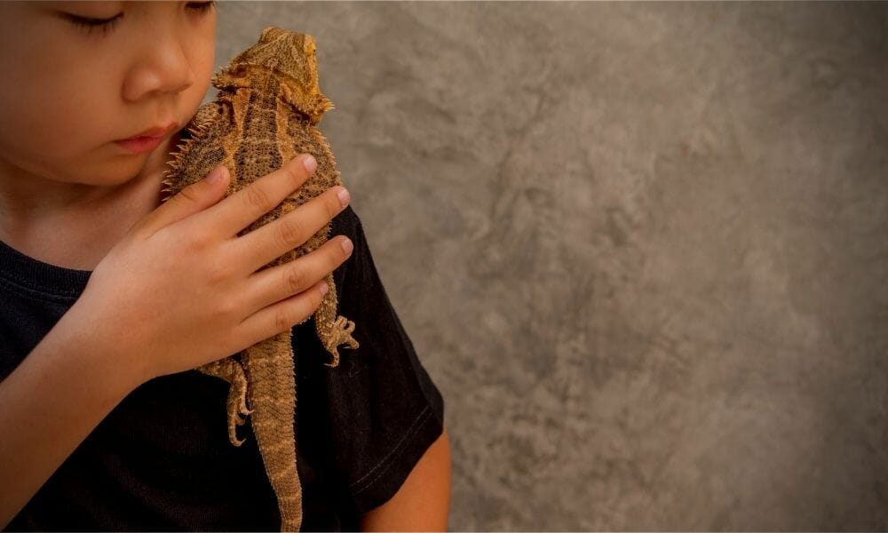 Can Bearded Dragons Cause Allergies? (The Truth)